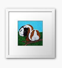 Guinea Pigs Framed Print