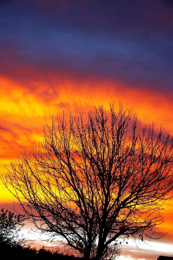 Lifting my spirit by Deidre Cripwell