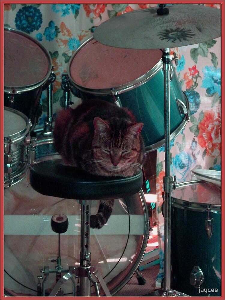 Cats love music too. by jaycee