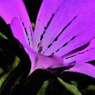 Purple Flower. by Forfarlass