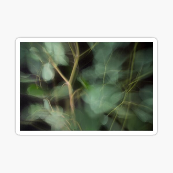 Fleur Blur-Abstract Eucalyptus Leaves on Black Background Sticker