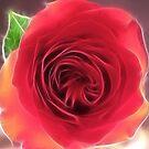 Soft Fractal Rose by Danielle Loscig