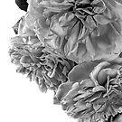 Mono Roses by Ann Garrett