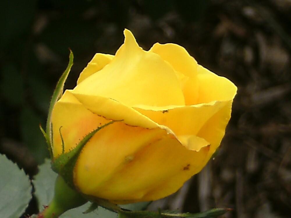 Yellow! by MaddyPaddy