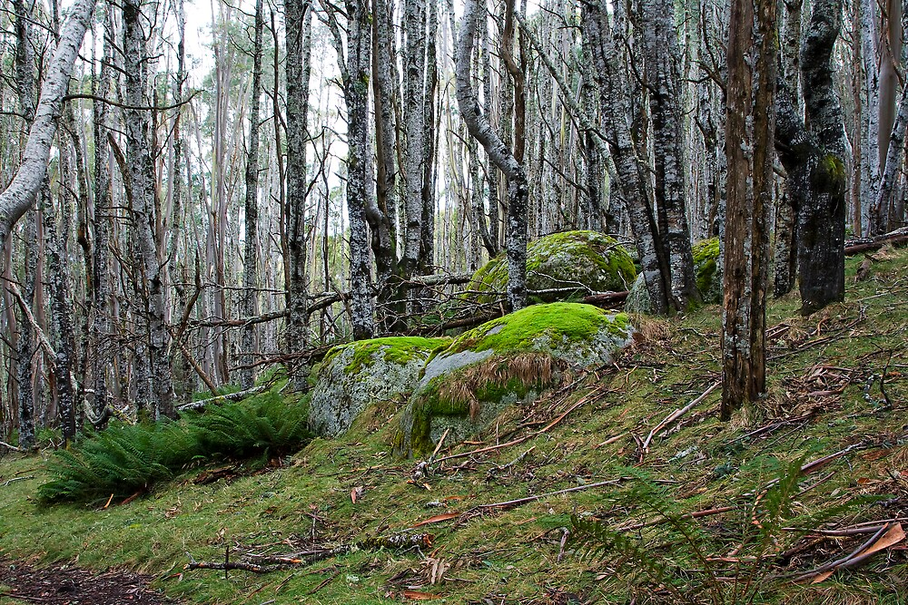 Mossy forest, Mt Erica by Andrew Klym