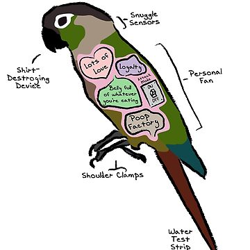 Anatomy of a Green Cheek Conure by MommySketchpad