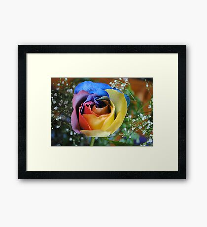 Rose of Many Hues Framed Print