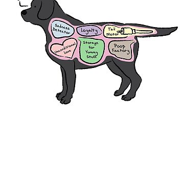 Anatomy of a Black Lab by MommySketchpad