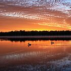 Pair of paddling pelicans.  by Ian Ramsay
