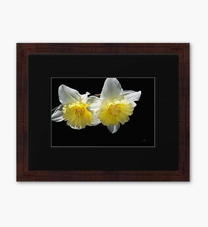 Beautiful Spring Life Of Daffodils Framed Print