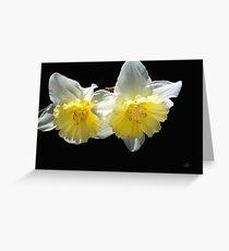 Beautiful Spring Life Of Daffodils Greeting Card