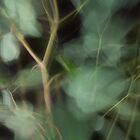 Fleur Blur-Abstract Eucalyptus Leaves on Black Background by AhUmDesign