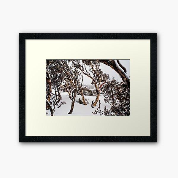 Snow Gums Framed Art Print
