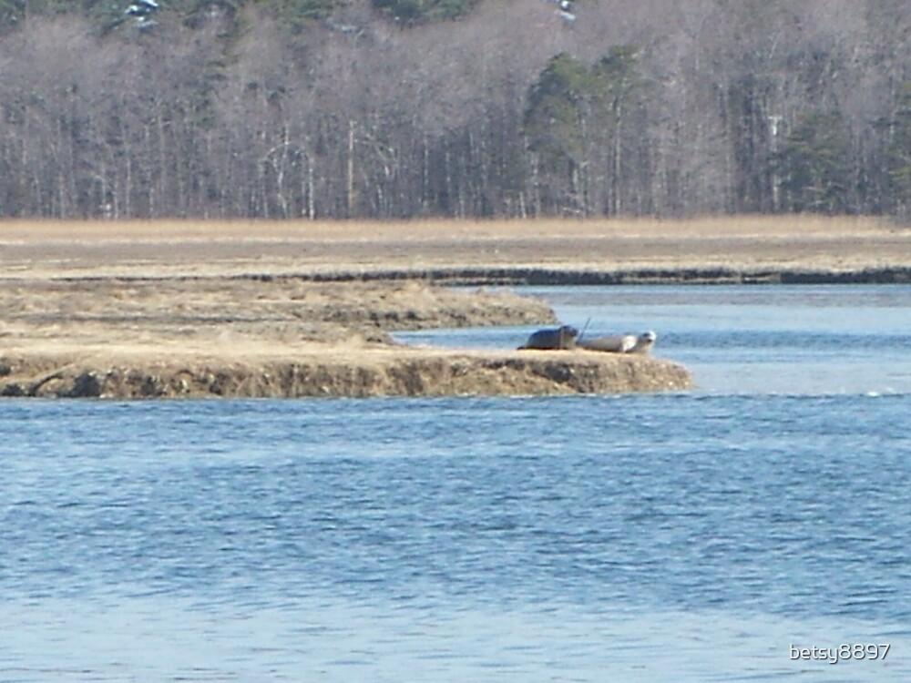 Harbor Seals by betsy8897