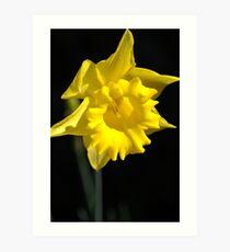The Daffodil Glows Art Print