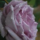 Pearl Drops by Lorraine McCarthy by Lozzar Flowers & Art