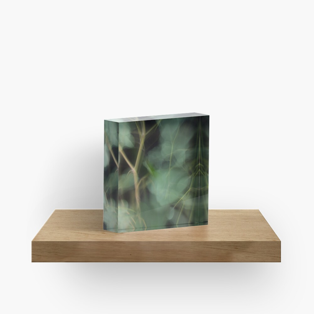 Fleur Blur-Abstract Eucalyptus Leaves on Black Background Acrylic Block