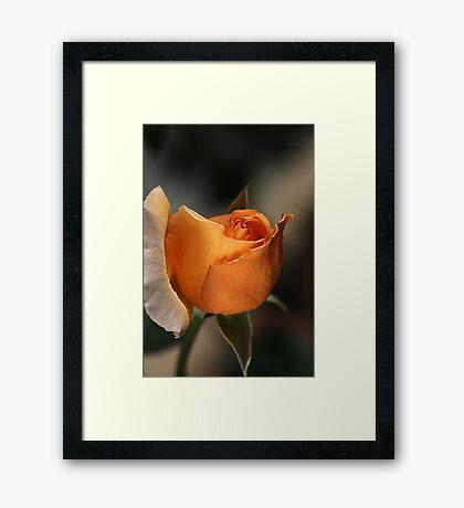 Orange Mood Framed Print