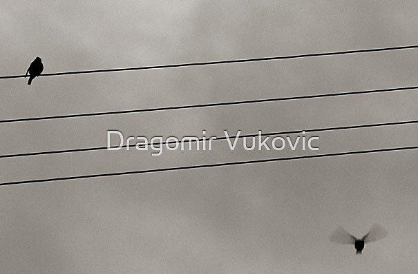 Yin&Yang by Dragomir Vukovic