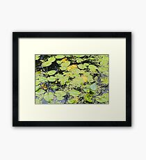 Water Lilies and Weeds on a Pond Closeup Framed Print