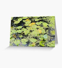 Water Lilies and Weeds on a Pond Closeup Greeting Card