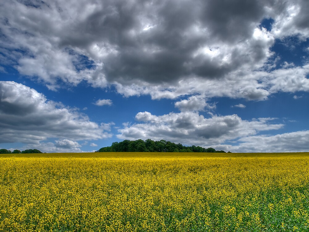 Rapeseed by Simon Hollingworth