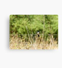 Just enjoying the day! ~ Willie Wagtail  Canvas Print