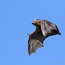 Flying Fox - 479 by Emmy Silvius