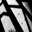 Shadow by Joshmo