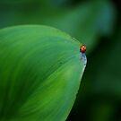 Ladybug Cruising on the Edge by Richard G Witham