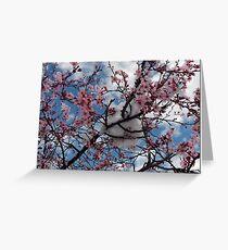Snow Blooms Greeting Card