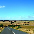 Port Fairy area down into the Valley, Vic. Australia by EdsMum
