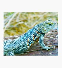 Mojave Speckled Lizard Photographic Print