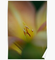 Soft Lilium Pastels Poster