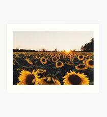 Sunflower Field 2016 Art Print