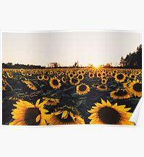 Sunflower Field (New 2016) Poster