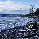 Shoreline on Lake Ontario - Amherst Island, Ontario by Michael Cummings