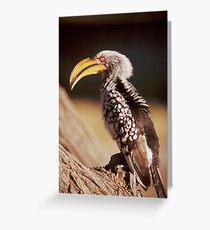 Yellow Billed Hornbill in Etosha National Park, Namibia Greeting Card