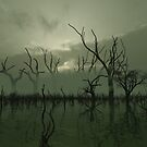 Misty Green Swamp by algoldesigns