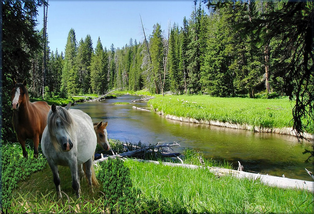 949-Wild River Horses by George W Banks