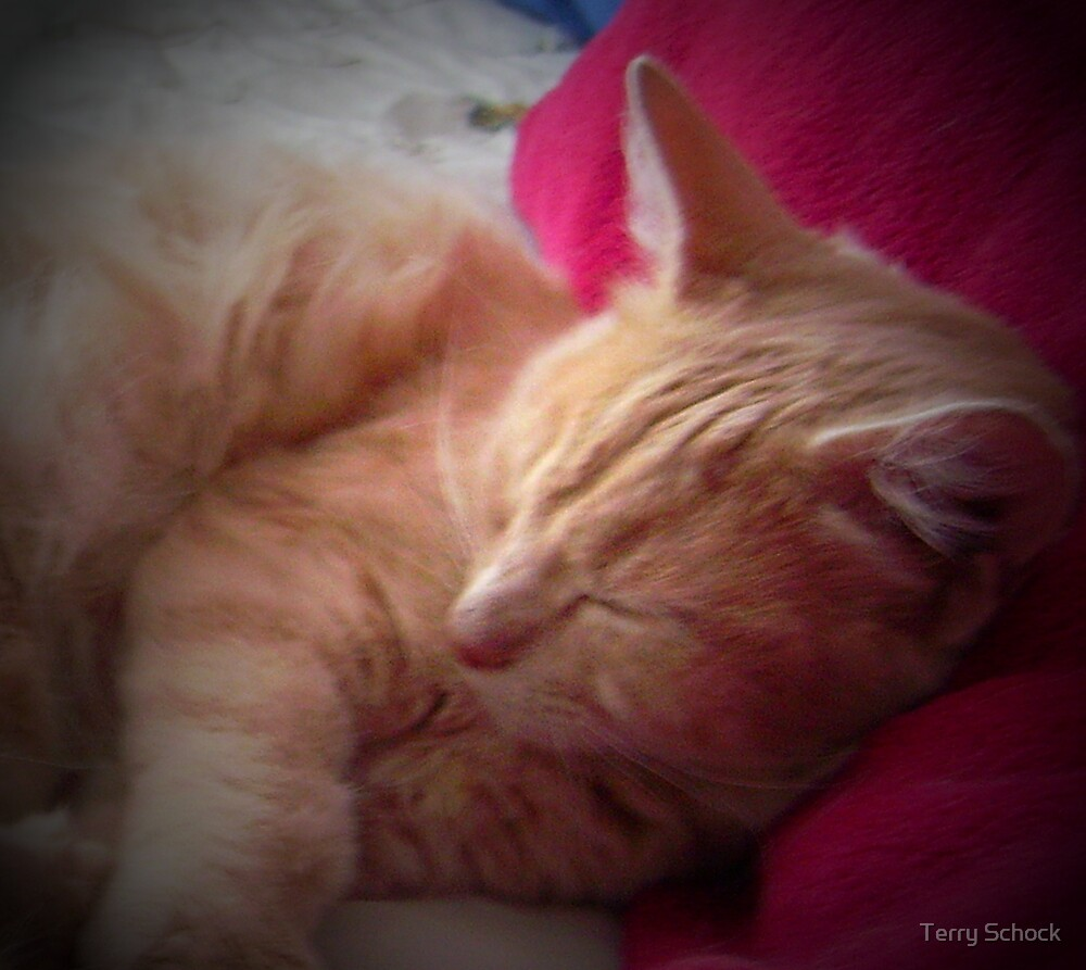 Baby at rest by Terry Schock