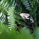 Schmetterlingsflügel von Marianna Tankelevich