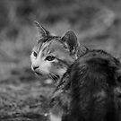 On the Prowl by Alan Rodmell