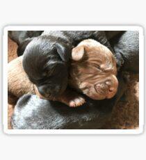 Labradorable babies  Sticker