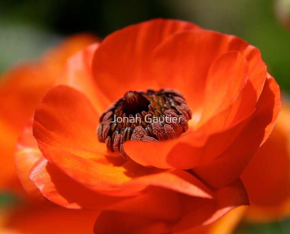 Poppy Love by Jonah Gautier