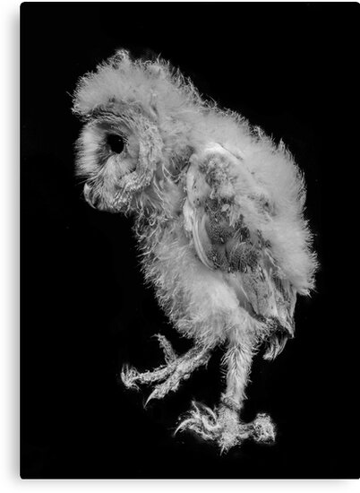 Stomping baby barn owl by LSmith0211