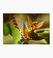 Tropical Delight   - JUSTART © Photographic Print