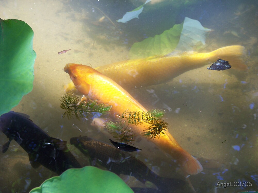 Fish in pond by Angel100706
