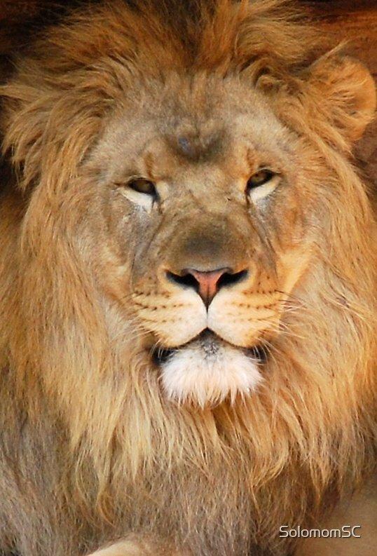 Lion King by SolomomSC