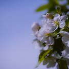 Spring is Here by Betty MacRae
